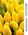 Beautiful Yellow Tulips  Big...
