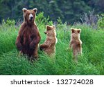 grizly bears at katmai national ... | Shutterstock . vector #132724028