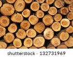 A pile of cut tree trunks giving a nice view of the concentric year rings - stock photo