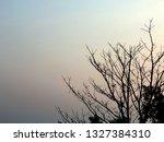 deciduous tree with sunrise sky ... | Shutterstock . vector #1327384310
