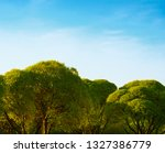 stylish trees in the city lawn | Shutterstock . vector #1327386779