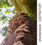 Many Fungi On A Tree Branch In...