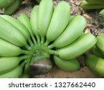 fresh green hand of banana from ... | Shutterstock . vector #1327662440