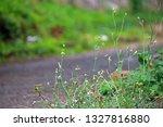 Delicate Weeds Next Ot A Tarre...