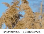 dry reed on the river  cane... | Shutterstock . vector #1328088926
