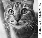 cat in black   white | Shutterstock . vector #1328223116