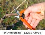 grape pruning  spring work in... | Shutterstock . vector #1328372996