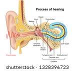 hearing process  ear anatomy 3d ... | Shutterstock .eps vector #1328396723