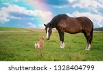 Horse And Border Collie Dog...