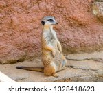meerkat animal  latin name... | Shutterstock . vector #1328418623