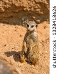 meerkat animal  latin name... | Shutterstock . vector #1328418626