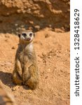 meerkat animal  latin name... | Shutterstock . vector #1328418629