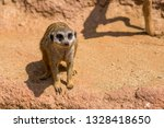 meerkat animal  latin name... | Shutterstock . vector #1328418650