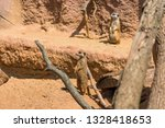 meerkat animal  latin name... | Shutterstock . vector #1328418653