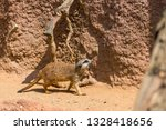 meerkat animal  latin name... | Shutterstock . vector #1328418656