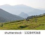 cow  alps