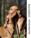 two dog friends | Shutterstock . vector #132852296