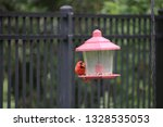 red male northern cardinal... | Shutterstock . vector #1328535053