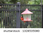 red male northern cardinal... | Shutterstock . vector #1328535080