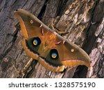 polyphemus moth   antheraea...   Shutterstock . vector #1328575190