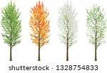 Tall Tree In Four Seasons...