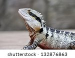eastern water dragon ... | Shutterstock . vector #132876863