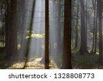 sunbeam entering rich deciduous ... | Shutterstock . vector #1328808773