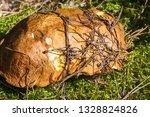 Autumn Photography  Mushrooms...