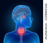 3d illustration of the thyroid... | Shutterstock . vector #1328860166