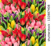 Постер, плакат: bouquet of multicolor tulips