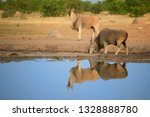 two eland antelopes taurotragus ... | Shutterstock . vector #1328888780