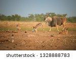 eland antelope taurotragus oryx ... | Shutterstock . vector #1328888783