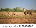 huge eland antelope taurotragus ... | Shutterstock . vector #1328888786