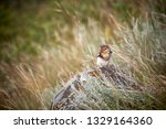 beautiful little hamster... | Shutterstock . vector #1329164360