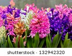 group multicolored hyacinths.... | Shutterstock . vector #132942320