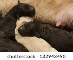 selective focus on new born... | Shutterstock . vector #132943490