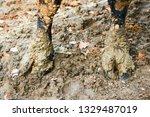cow leg in mud. fearlessness... | Shutterstock . vector #1329487019