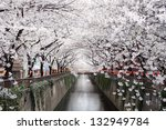 beautiful cherry blossom tunnel ...