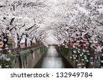 Beautiful Cherry Blossom Tunne...