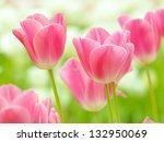 Multi Coloured Tulips And...