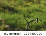 sri lankan bird.  taken on a...   Shutterstock . vector #1329557720