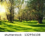sunny green forest with shadow | Shutterstock . vector #132956108