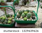 green basket of cactuses with... | Shutterstock . vector #1329639626