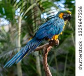 birds on trees | Shutterstock . vector #1329647336