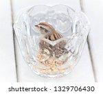 sparrows feeding. sparrows... | Shutterstock . vector #1329706430