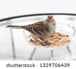 sparrows feeding. sparrows... | Shutterstock . vector #1329706439