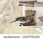 brown headed cowbirds eating... | Shutterstock . vector #1329733103