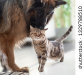cat and dog together indoors.... | Shutterstock . vector #1329788510