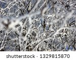 morning frost painted birch... | Shutterstock . vector #1329815870