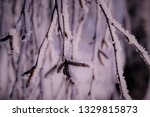 morning frost painted birch... | Shutterstock . vector #1329815873